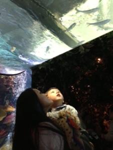 Aquarium inside Rainforest Cafe